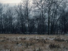 Dead winter days V by Topielica666