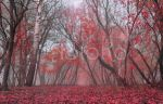 Autumn Forest VS STOCK purple red by AStoKo