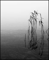 Reed in the fog by StonyStoneIsStoned2