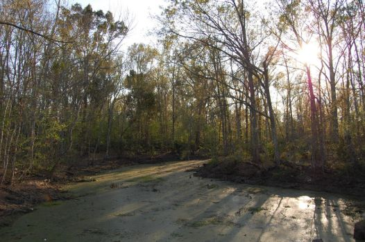 shadows over the swampland by capricious23pictures