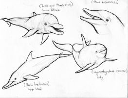 Dolphin sketches 3 by amorousdino
