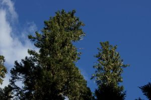 Trees 1211.10 by Dilong-paradoxus