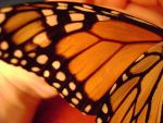 Butterfly Wing by DDRchick1234