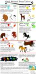Gods Blessed Breed Sheet by Palominobrumbyfilly