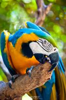 Hungry Parrot by jpnunezdesigns
