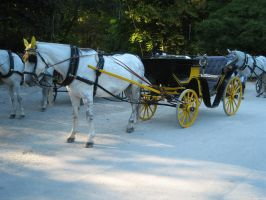 horse carriage by two-ladies-stocks