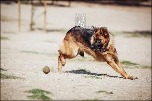 Dog Park v by XetsaPhoto