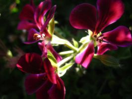 IMG_0068 by TheSylverBlue
