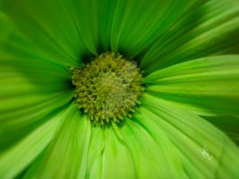 Green with Envy by njbartworks