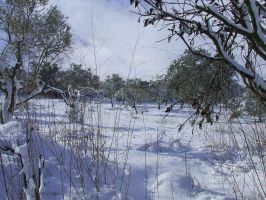 snow 2008-2 by adibhanna