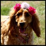 Princess Pooch by In-the-picture