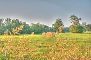 Pasture HDR Two by Dramier