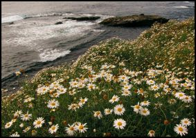 Springtime at The Cove by JoeBostonPhotography