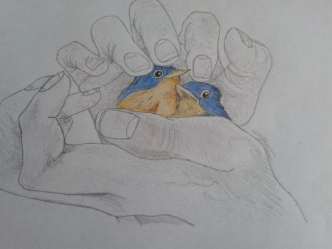 birds in a hand drawing by wayne177