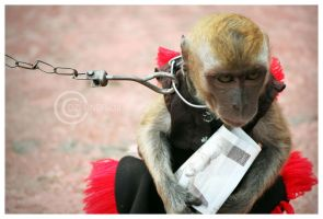 Monkey Love Money by DziGokey