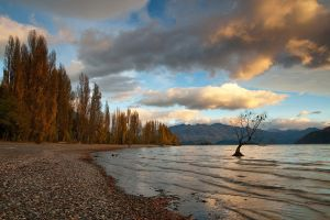The Wanaka Tree Again by chrisgin