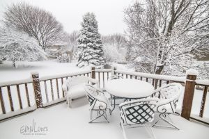 33: Backyard Blizzard by FramedByNature