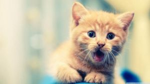 Wallpapers || Cute Cat Camera BY: TFL by TutosFunnyLoveDA