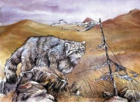 Pallas Cat by kenket