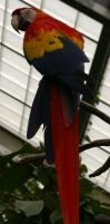 Scarlet Macaw - 7 by OverStocked