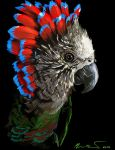 Hawkhead Parrot by supercrazzy