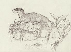 Otter Shrew by Eurwentala