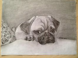 Mops dog in pencil and charcoal by Jylm75