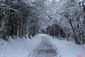 Snow Walk by penfold73