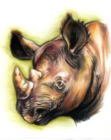 black rhino by EatToast