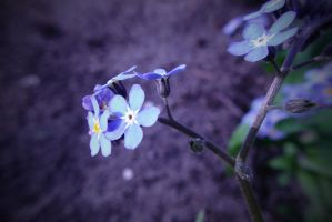Blues by vlr