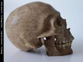 freaksmg-stock - new skull 2 by freaksmg-stock