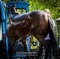 Horse Racing 377 by JullelinPhotography