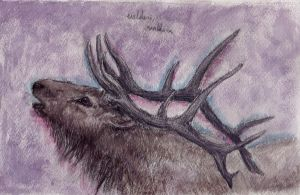 Wapiti in violet by thatwillowkid