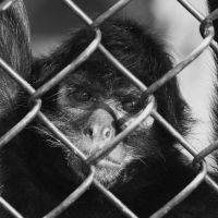 Caged III B and W by asaph70