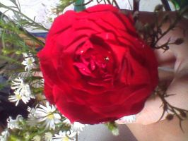 red rose and flowers by idielastyr