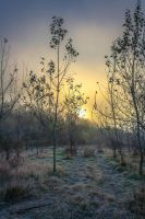 Frozen morning by dutuflorin