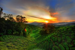 Cameron Highland in HDR by minlie