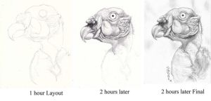 Vulture Progression Drawing!! by ZombieWil