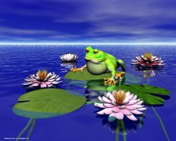 Waterlily frog by Bambolay
