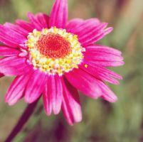 Pink and Yellow by FrancizzBm