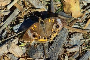 Moth in the Mulch by SCT-GRAPHICS