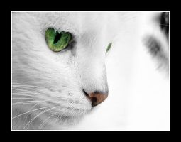 White Cat I by rafalhyps
