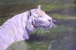 White tiger in green water by ResanVanLeeuwen