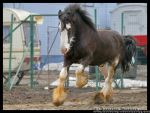 Circus Draft  Horse by crisvsv
