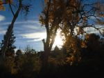 The sky and the fall leaves by mylesterlucky7