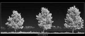 The Tree by CureBoy