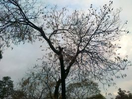 tree fancied by birds by Naima-amjad