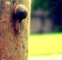 .Snail by Spilled-Sunlight