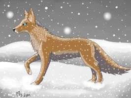 Wolf in the snow by MajaLykke