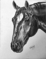 Charcoal Horse Head by smerfette